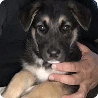 Adopt A Pet :: Gary - Downey, CA
