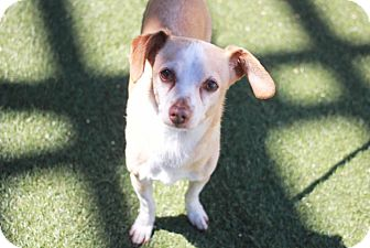Terrier (Unknown Type, Small) Mix Dog for adoption in Redwood City, California - Kip