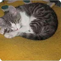 Adopt A Pet :: Gina - Jeffersonville, IN