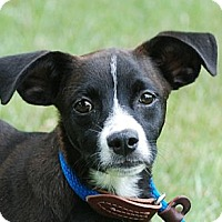 Adopt A Pet :: Murphy - Providence, RI