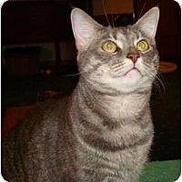 Adopt A Pet :: Susie - Port Republic, MD