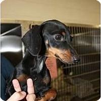 Adopt A Pet :: Mason - Arlington, TX