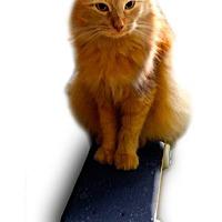 Adopt A Pet :: Icy - Alexandria, VA