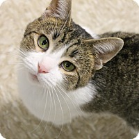 Adopt A Pet :: Jenny - Medina, OH