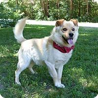 Adopt A Pet :: Rocky - Mocksville, NC