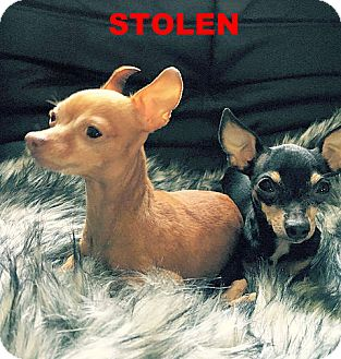Chihuahua Dog for adoption in La Verne, California - Helena and Trinity