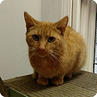 Adopt A Pet :: Rusty - Elyria, OH