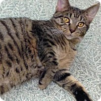 Adopt A Pet :: Gary - Anderson, IN