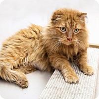 Adopt A Pet :: Ocho Rios - Austin, TX