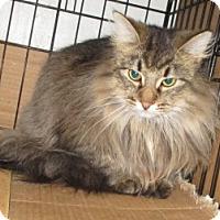 Adopt A Pet :: MissLeah-adopted Sat. 4-29-17 - detroit, MI