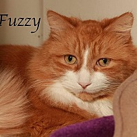 Adopt A Pet :: Fuzzy - Fall River, MA