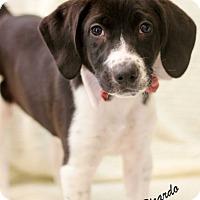 Adopt A Pet :: Ricardo - Dalton, GA