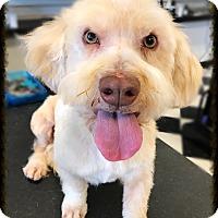 Adopt A Pet :: Pancho 2 - Los Alamitos, CA
