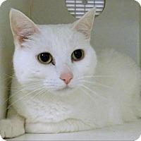 Adopt A Pet :: Babies - Topeka, KS