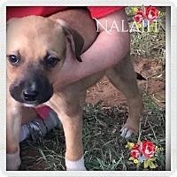 Adopt A Pet :: Nailah - DeForest, WI