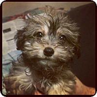 Adopt A Pet :: Winona - Louisville, KY