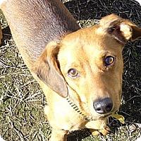 Adopt A Pet :: Dex - San Jose, CA