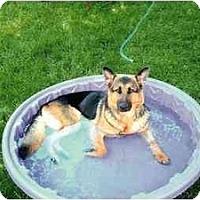 Adopt A Pet :: Pearl - Belleville, MI