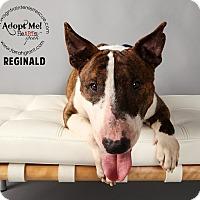 Adopt A Pet :: Reginald - Omaha, NE