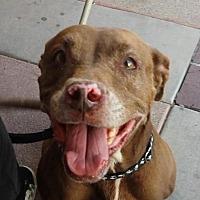 Adopt A Pet :: Leah - Porter Ranch, CA
