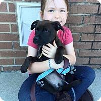 Adopt A Pet :: Mercy - Marietta, GA