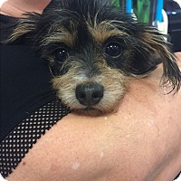 Adopt A Pet :: Minnie - Brea, CA