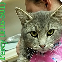 Adopt A Pet :: Percy - Tiffin, OH