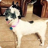 Adopt A Pet :: Vivien - ROSENBERG, TX