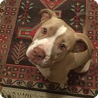 Adopt A Pet :: Nala - Parkton, NC