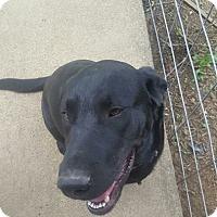 Adopt A Pet :: Todd - Cincinnati, OH