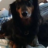 Adopt A Pet :: Max - LaGrange, OH