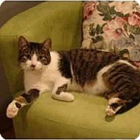 Adopt A Pet :: Neo-PETSMART - Muncie, IN