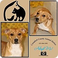 Adopt A Pet :: Duke - Jacksboro, TN