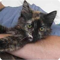Adopt A Pet :: Fluffer Nutter - Jenkintown, PA
