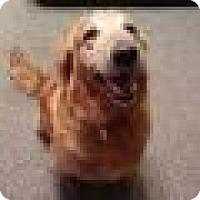 Adopt A Pet :: Lady Jane - Denver, CO