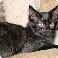 Adopt A Pet :: Julia - Santa Rosa, CA