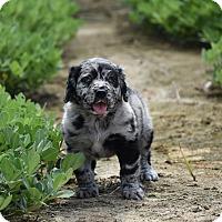 Adopt A Pet :: Trader - Groton, MA