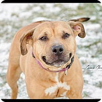 Adopt A Pet :: Eliza -ADOPTED! - Zanesville, OH
