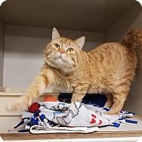 Adopt A Pet :: C-6 - Indianola, IA