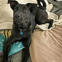 Adopt A Pet :: Brutus the teen - Jupiter, FL
