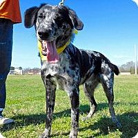Adopt A Pet :: Dingo - St. Francisville, LA