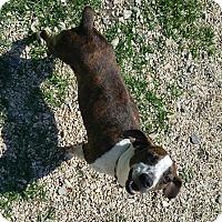 Adopt A Pet :: Demi - Hammond, LA