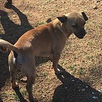 Adopt A Pet :: Chevy - Blanchard, OK