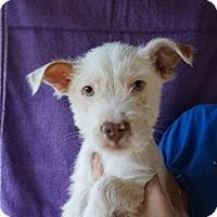Adopt A Pet :: Pie - Oviedo, FL