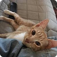 Adopt A Pet :: Nemo - New York, NY