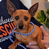 Adopt A Pet :: Lilo - Huntley, IL
