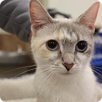 Adopt A Pet :: Marbles nka Misty DECLAWED - Troy, IL