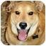 Photo 3 - Jindo/German Shepherd Dog Mix Dog for adoption in Pasadena, California - Ray