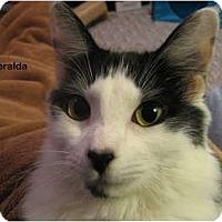 Adopt A Pet :: Esmeralda - Portland, OR