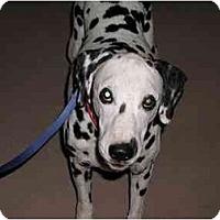 Adopt A Pet :: Travis - Mesa, AZ
